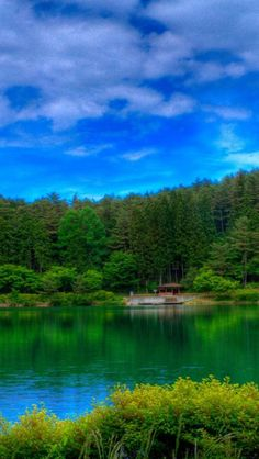 Lake, Forest, Natural, Picturesque,