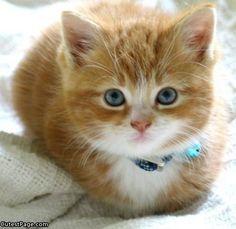 adorable marmalade