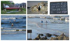 Voelklip Beach, a favorite swimming beach in Hermanus Great White Shark, Whale Watching, Cape Town, Photo Editor, Day Trips, Mountain Biking, Diving, Beaches, Swimming