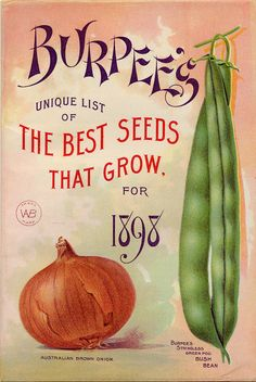 "Chineese style font featured on Burpee's ""Unique List of The Best Seeds That Grow."" for 1898 Australian Brown Onion and a bush bean."