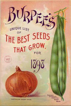 "Vintage Labels Chineese style font featured on Burpee's ""Unique List of The Best Seeds That Grow."" for 1898 Australian Brown Onion and a bush bean. Pub Vintage, Vintage Diy, Vintage Labels, Vintage Cards, Decoupage Vintage, Vintage Ideas, Garden Catalogs, Seed Catalogs, Plant Catalogs"