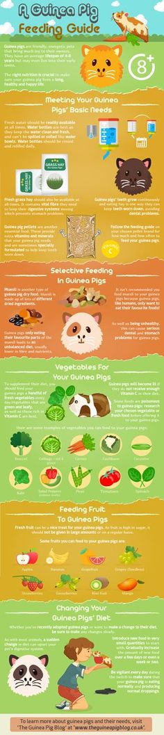 Want to know more about the diet of guinea pigs or want a quick feeding guide to refer to? Here is our Guinea Pig Feeding Guide infographic.