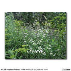 Wildflowers & Weeds Iowa Postcard