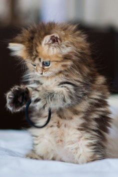 Picture 10 - Cute baby animals, this exactly what my cat does collects my hair ties