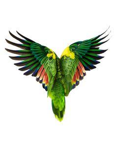 parrot prints - Google Search
