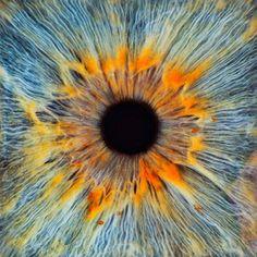 Eye | Iris | Pupil | 目 | œil | глаз | Occhio | Ojo | Color | Texture | Pattern | Macro |  2PATTERNITY