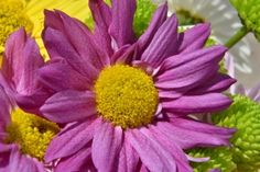 Flower – Saturday's Purple And Yellow Daily Jigsaw Puzzle