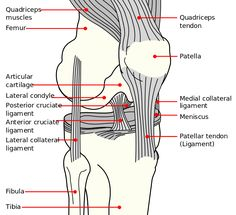 Knee Anatomy - Knee Pain - Runners Knee