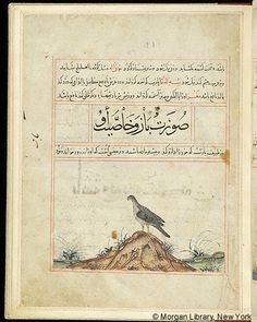Bestiary, Falcon in left profile standing on hill; grassy setting.- The Morgan Library & Museum