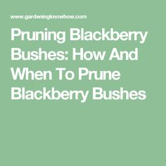 Pruning Blackberry B