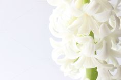 White Hyacinth by Bright Young Things on Creative Market