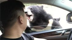 Bear bites man in China 'tiger death' wildlife park http://ift.tt/2vkqpMM