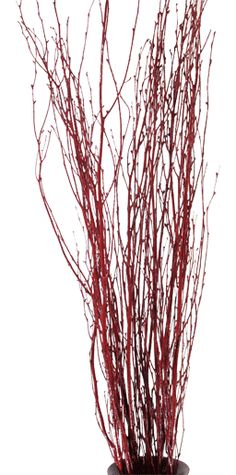What Spray Paint To Use On Birch Or Willow Twigs