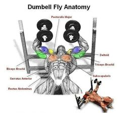 Dumbbell Fly Anatomy