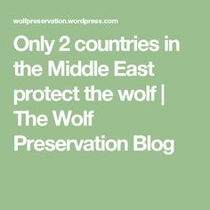 Only 2 countries in the Middle East protect the wolf  | The Wolf Preservation Blog