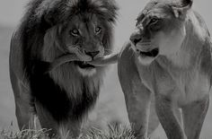 lion love Boys.  Always pulling some girl's hair just to show her how much he likes her.