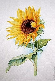 Drawing `Sunflower` watercolor - Sites new Sunflower Drawing, Sunflower Art, Watercolor Sunflower, Watercolor Flowers, Watercolor Paintings, Drawing Flowers, Watercolor Drawing, Watercolor Video, Acrylic Paintings