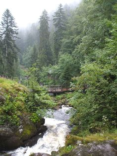Schwarzwald, DE  Beauty - The Black Forest where my Opa is from!