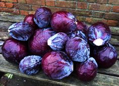A deep purple Christmas moment here Organic Vegetables, Deep Purple, Cabbage, Christmas, Food, Xmas, Essen, Cabbages, Navidad
