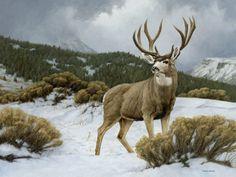 mule deer art - Google Search Wildlife Paintings, Wildlife Art, Animal Paintings, Deer Paintings, Deer Drawing, Big Deer, Deer Illustration, Deer Photos, Hunting Art