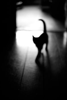 ~ cat shadow and silhouette