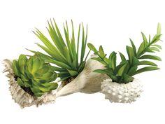 """LQS420-GR 3"""" Succulent in Sea Shell (3 ea./set) Green"""
