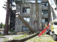 Need help, but don't know who to trust? Listen to who your neighbors recommend! Contact AaDams Tree & Landscaping for any tree removal in Woodinville, WA.  Aadams Landscaping & Restoration LLC 15936 Mink Road NE Woodinville, WA 98077 Phone: 425-844-9923