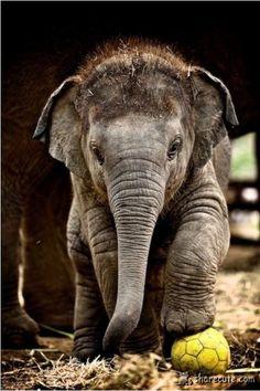 Baby elephant is so cute!