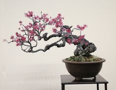 Bonsai Forest, Bonsai Art, Bonsai Garden, Modern Art Paintings, Cool Paintings, Ikebana, Cherry Bonsai, Prunus Mume, Bonsai Tree Types
