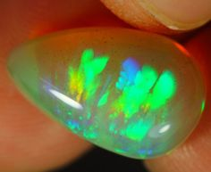 Rare Natural 6ct Welo Opal Fern and Leaf Pattern by Paleospark