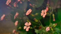 wallpaper flower High Resolution Download