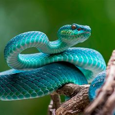 Pretty Snakes, Cool Snakes, Beautiful Snakes, Cute Reptiles, Reptiles And Amphibians, Beautiful Creatures, Animals Beautiful, Baby Animals, Cute Animals
