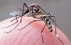 Apontado como responsável pelo aumento de casos de microcefalia no País, o zika vírus infectou ao me...