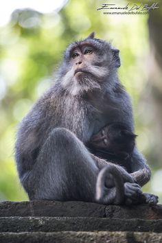 A New Mom by emanueledelbufalo on 500px