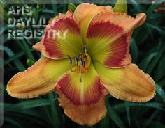 Daylily Get'R Done