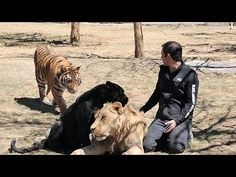 LE - AD Sustentable: Black Jaguar White Tiger - AD - YouTube