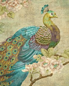 Indian Peacock Giclee Print by Suzanne Nicoll Peacock Decor, Peacock Art, Peacock Design, Peacock Colors, Peacock Feathers, Peacock Blue, Peacock Images, Peacock Pictures, Indian Peacock