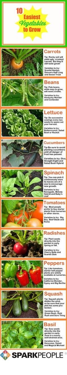 The 10 Easiest Vegetables to Grow: You dont have to have a green thumb to grow these easy plants! | via http://@SparkPeople #food #garden #spring