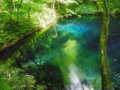 「青池」青森県、白神山地
