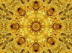 floral kaleidoscope ~ yellow roses