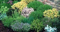 Sito con consigli per la coltivazione delle erbe aromatiche, in terra e in vaso, consigli di composizione e alcuni nomi interessanti