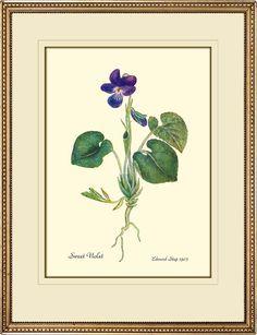 Violet Antique Botanical print reproduction. $15.00, via Etsy.