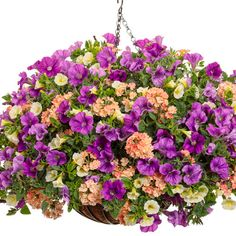 Proven Winners - Sangria Bouquet combination container recipe containing Superbells® Yellow Chiffon™ - Calibrachoa hybrid, Superbena Royale® Peachy Keen . Outdoor Flower Planters, Outdoor Flowers, Hanging Flower Baskets, Hanging Plants, Fall Containers, Border Plants, Proven Winners, Flower Food, Container Flowers