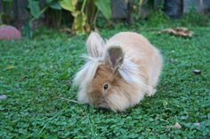 Bunny Enjoys the Summer Garden - June 16, 2011