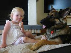 Bear, the kids friend, playmate and protector. Shepherd Dog, German, Flower Girl Dresses, Bear, Dogs, People, Deutsch, German Language, Pet Dogs