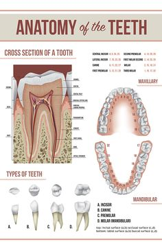 Read these simple dental care tips on how to keep your mouth clean and away from gum disease. If you want to avoid costly dental trips, then use these tips on a daily basis. Dental Assistant Study, Dental Hygiene Student, Oral Hygiene, Dental Hygienist, Dental Life, Dental Teeth, Rda Dental, Smile Dental, Dental Posters