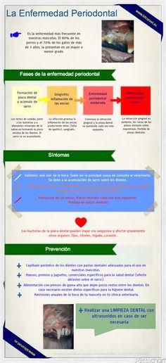 La salud dental de tus #mascotas. www.bilcorvet.es