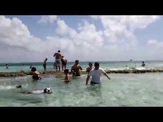 EL ACUARIO - ISLA SAN ANDRES COLOMBIA - http://www.nopasc.org/el-acuario-isla-san-andres-colombia/