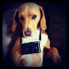 Un fotografo canino!!!!!
