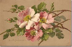 Antique Postcard ~ C. Klein